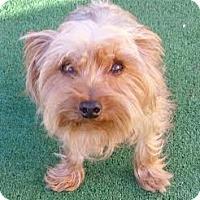 Adopt A Pet :: Mia - Orange, CA