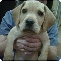 Adopt A Pet :: Sundance Kid - Cumming, GA