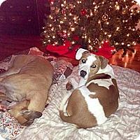 Adopt A Pet :: Isabella - Marietta, GA