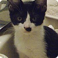 Adopt A Pet :: Juliet - St. Petersburg, FL