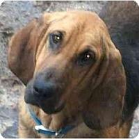 Adopt A Pet :: Kingston - Albany, NY
