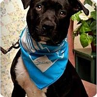 Adopt A Pet :: Tuxedo - Auburn, CA
