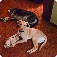 Adopt A Pet :: Basil - Lewisville, IN