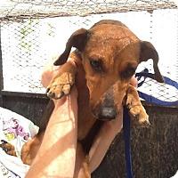 Adopt A Pet :: Keifer - Phoenix, AZ