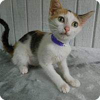 Adopt A Pet :: Felicia - The Colony, TX