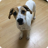 Adopt A Pet :: Heather in CT - East Hartford, CT