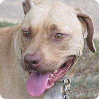 Adopt A Pet :: Emily - Foster Care - Oxford, MS