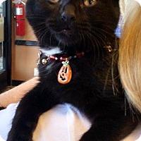 Adopt A Pet :: Kendra - Seminole, FL