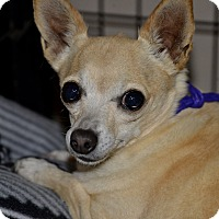 Adopt A Pet :: Blueberry - Meridian, ID