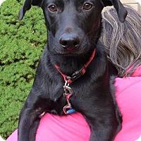 Adopt A Pet :: Binks - SOUTHINGTON, CT