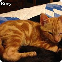 Adopt A Pet :: Rory - Bentonville, AR