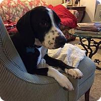 Adopt A Pet :: Herminio - Houston, TX