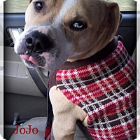 Adopt A Pet :: JoJo - Blacklick, OH
