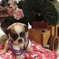 Adopt A Pet :: Baby A - springtown, TX