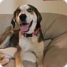 Adopt A Pet :: Maylee