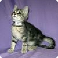 Adopt A Pet :: Jackson - Powell, OH