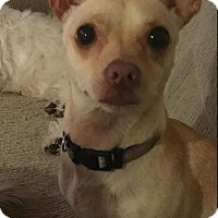 Adopt A Pet :: Bruce - Poway, CA