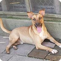 Adopt A Pet :: Felix - Canton, CT
