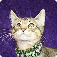 Adopt A Pet :: Hewey - Jackson, MI