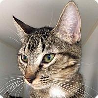 Adopt A Pet :: Luna - Prescott, AZ