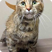 Adopt A Pet :: Carol - Shorewood, IL
