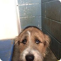 Adopt A Pet :: Sally - Clarkesville, GA
