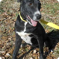 Adopt A Pet :: Tori - Allentown, NJ