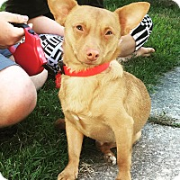 Adopt A Pet :: Red (COURTESY POST) - Baltimore, MD