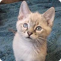 Adopt A Pet :: Bastian - Davis, CA