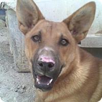 Adopt A Pet :: Gideon - Las Vegas, NV