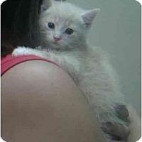 Adopt A Pet :: Jennifer - Reston, VA