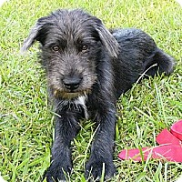 Adopt A Pet :: Mulligan - Mocksville, NC