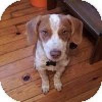 Adopt A Pet :: Conan - Novi, MI