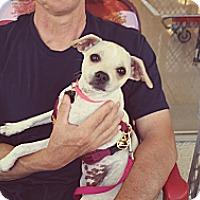 Adopt A Pet :: Anna - Santa Ana, CA