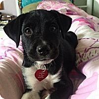 Adopt A Pet :: Bloom - Huntsville, AL