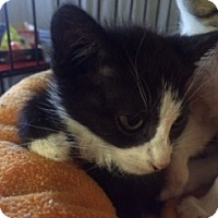 Adopt A Pet :: May - Forest Hills, NY