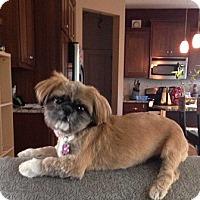 Adopt A Pet :: SEALYpending - Eden Prairie, MN