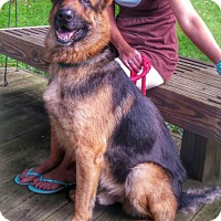 Adopt A Pet :: Duke - Rochester/Buffalo, NY