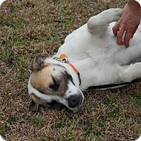 Adopt A Pet :: Jasmine-Adoption Pending - Pinehurst, NC