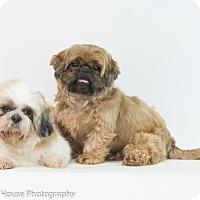 Adopt A Pet :: Harley & Winston - Jacksonville, FL