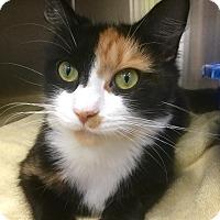 Adopt A Pet :: Misty - Webster, MA