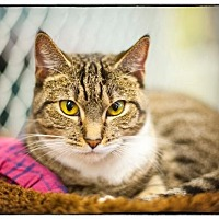 Adopt A Pet :: Madonna - Freeport, NY