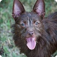 Adopt A Pet :: Coco (ginger) - Huntsville, AL