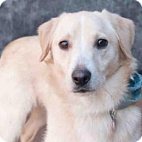 Collie Mix Dog for adoption in Pittsburgh, Pennsylvania - SEGER