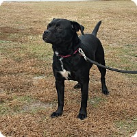 Adopt A Pet :: ONYX - Wilmington, NC