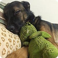 Adopt A Pet :: Outlaw - Mebane, NC