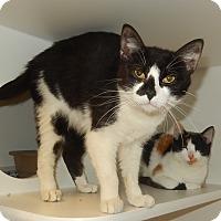 Adopt A Pet :: Tigger - Newport, NC