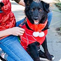 Adopt A Pet :: Tonic - Los Angeles, CA