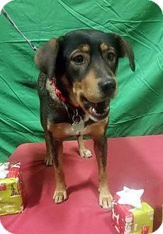 Shepherd (Unknown Type) Mix Dog for adoption in Detroit, Michigan - Autumn - Foster Needed