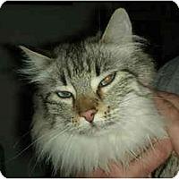 Adopt A Pet :: Sophie - Washington Terrace, UT
